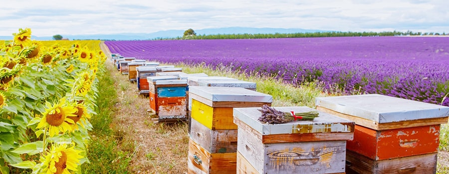 bee-farm