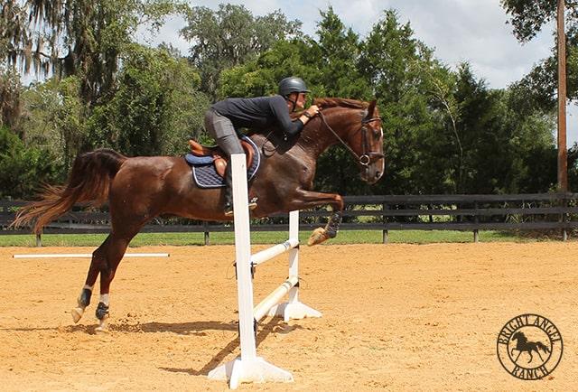 bright angel ranch horse jumping